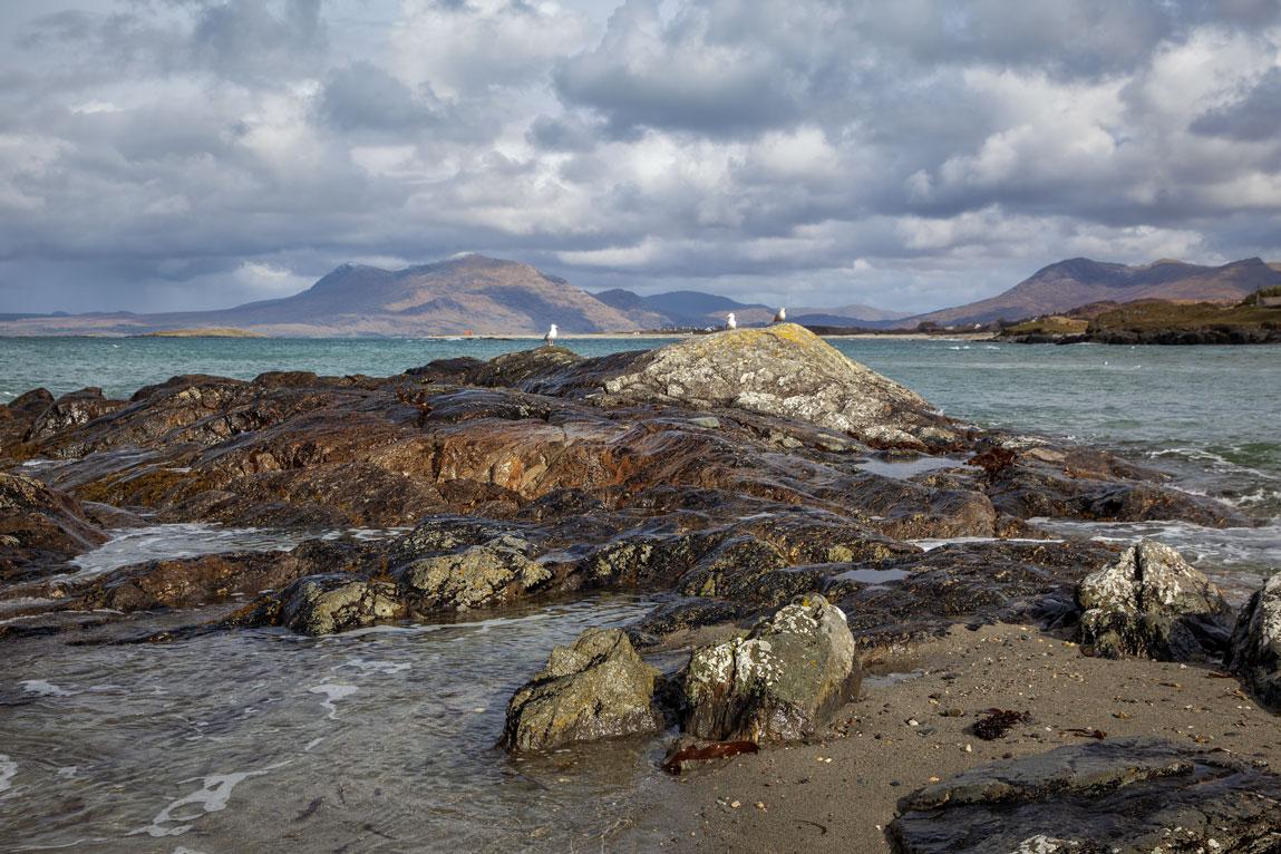 Mouettes et paysage irlandais